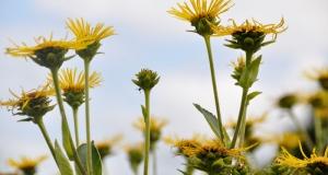 Zdravlje bilja: EU-ovi stručnjaci podržali mjere za sprečavanje širenja azijske strizibube