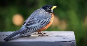 Direktive EU-a o pticama i staništima: Komisija traži mišljenja o budućnosti zakonodavstva EU-a o zaštiti prirode