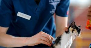 Komisija objavila smjernice za opreznu uporabu antimikrobnih sredstava u veterinarskoj medicini