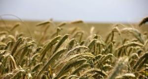 Komisija objavila način primjene paketa potpore za poljoprivrednike u vrijednosti od 500 milijuna eura