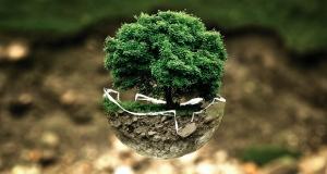 Zaštita prirode u Europi: potrebne su ambicioznije mjere da bi se do 2020. zaustavio gubitak bioraznolikosti