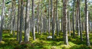Europska komisija ulaže 160,6 milijuna eura u 96 novih projekata zaštite okoliša