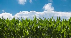 GMO: Komisija odobrila dva GMO-a za upotrebu u hrani i hrani za životinje