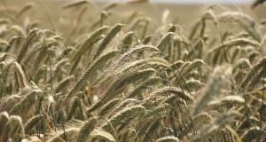 Europska komisija aktivirala izvanredne mjere radi dodatne podrške europskim poljoprivrednicima u krizi
